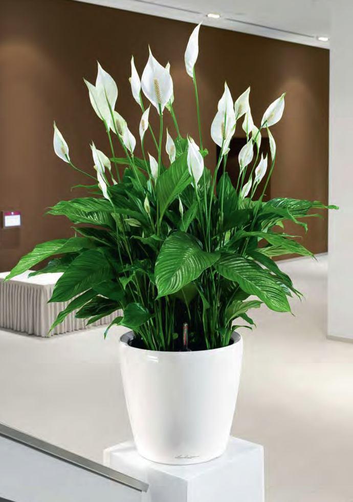 Vasi e piante set 3