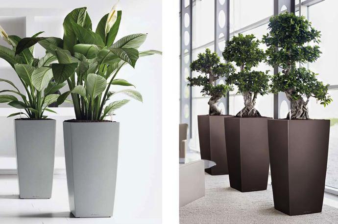 Vasi e piante set 1